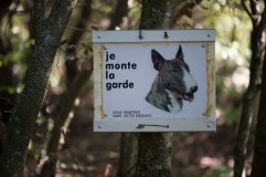1a_Dog sign
