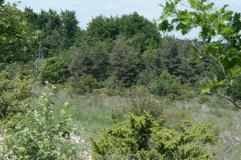 6a_Limestone woody grassland Lagarde d Apt