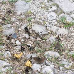 Lepidoptera-diversity-on-ground