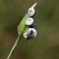 Snails and fly