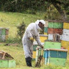 Chilean beekeeper