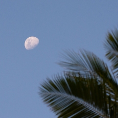 Moon and coconut palms