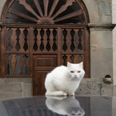 Limano white cat 2