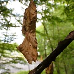 Dead leaf. Kosjanski Park, Slovenia